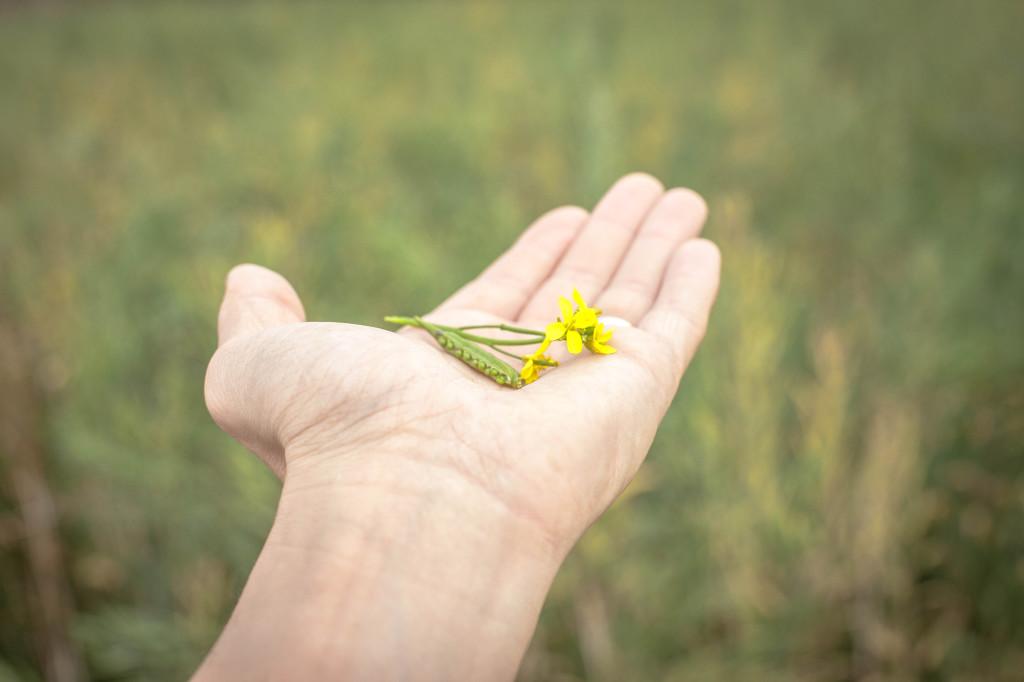 mustard hand